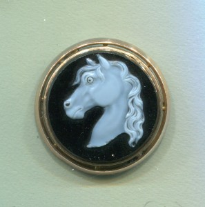 cased horse153